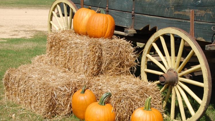 Pumpkin & Hay Bales