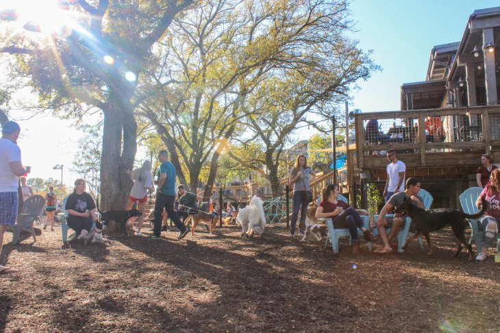 People and dogs enjoying Bacon's Dog Park behind The Shacks at Austin Ranch